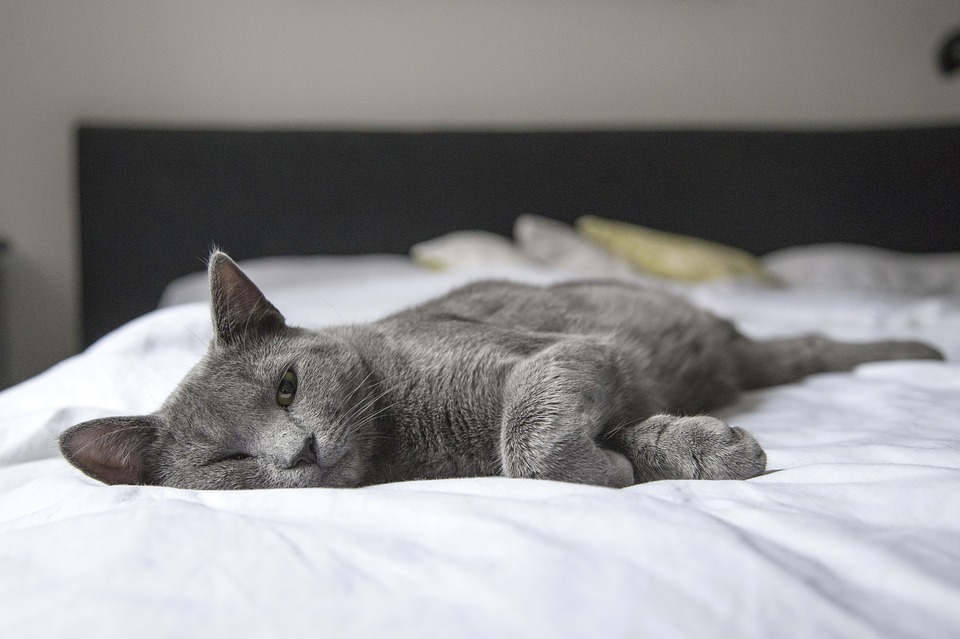 cat laying on mattress comfortably