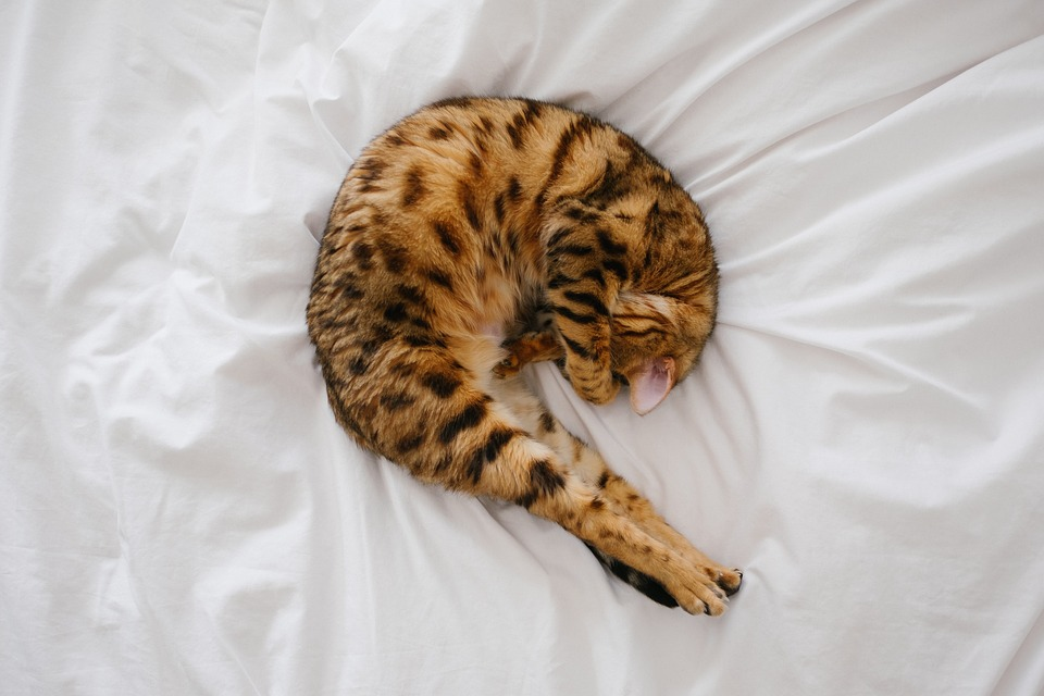 cat curling up on the bed